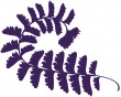 Curly Fern - purple