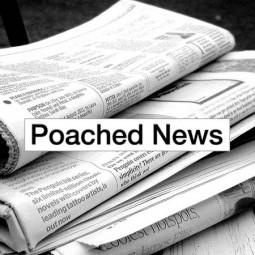 poachednewsft
